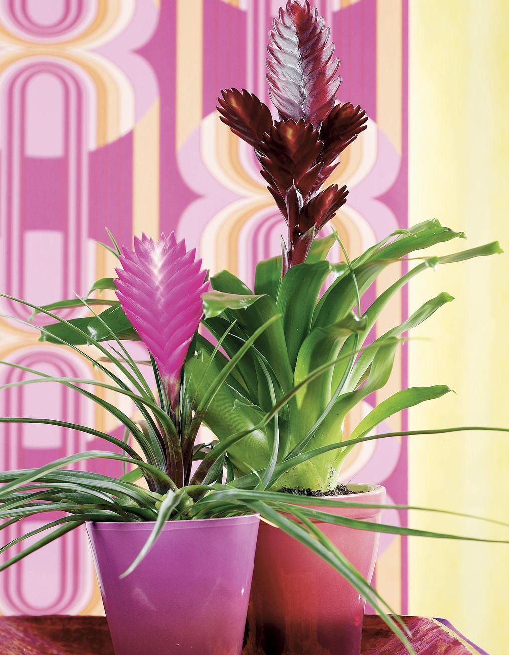 exotiska växter inomhus