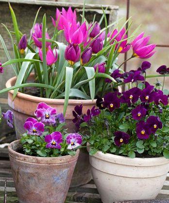blommor utomhus vår